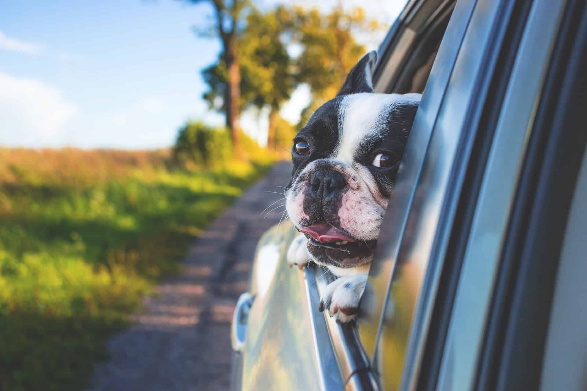 my dog hates car rides