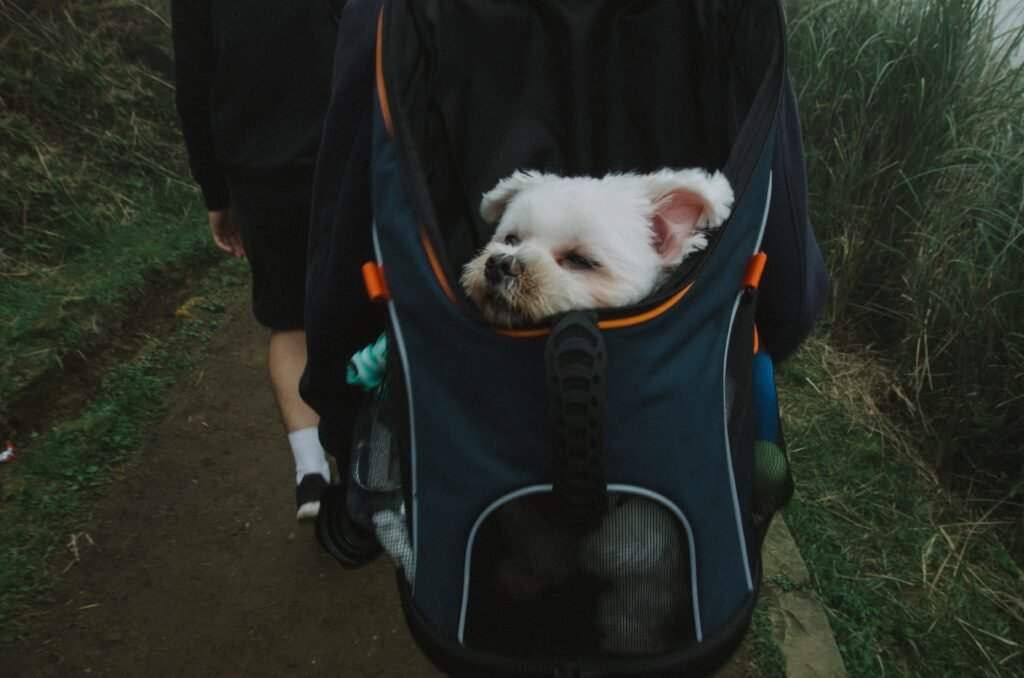 Pet Carriers and Airlines