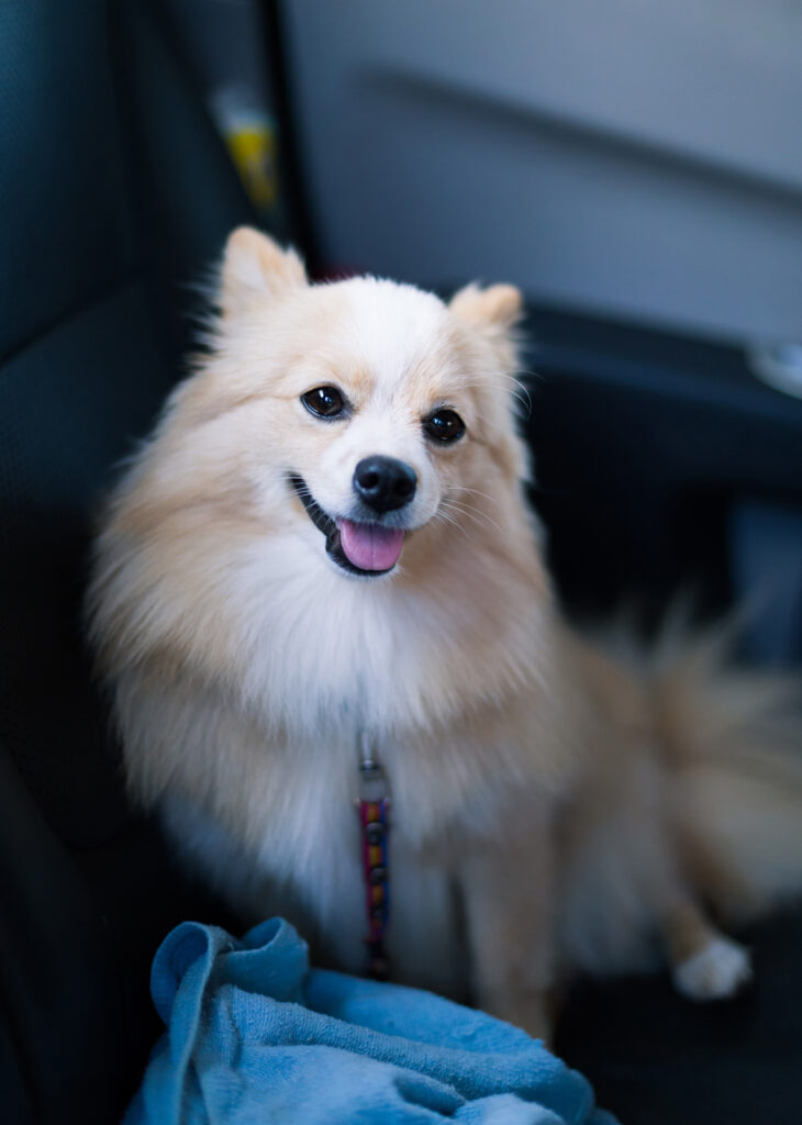 Riding a Lyft With pets