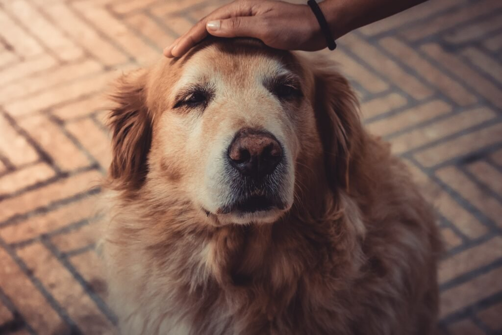 Reducing Dogs Anxiety When Flying