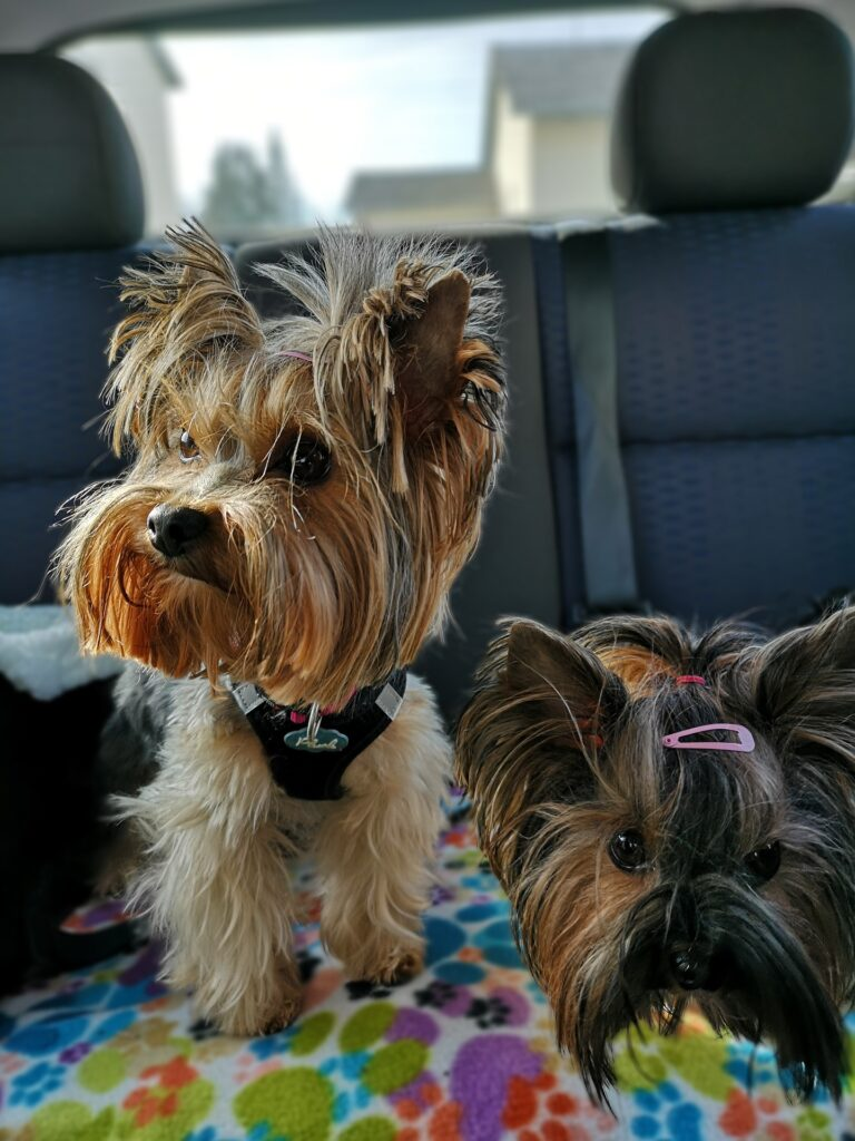 Uber Riding With Dogs Tips