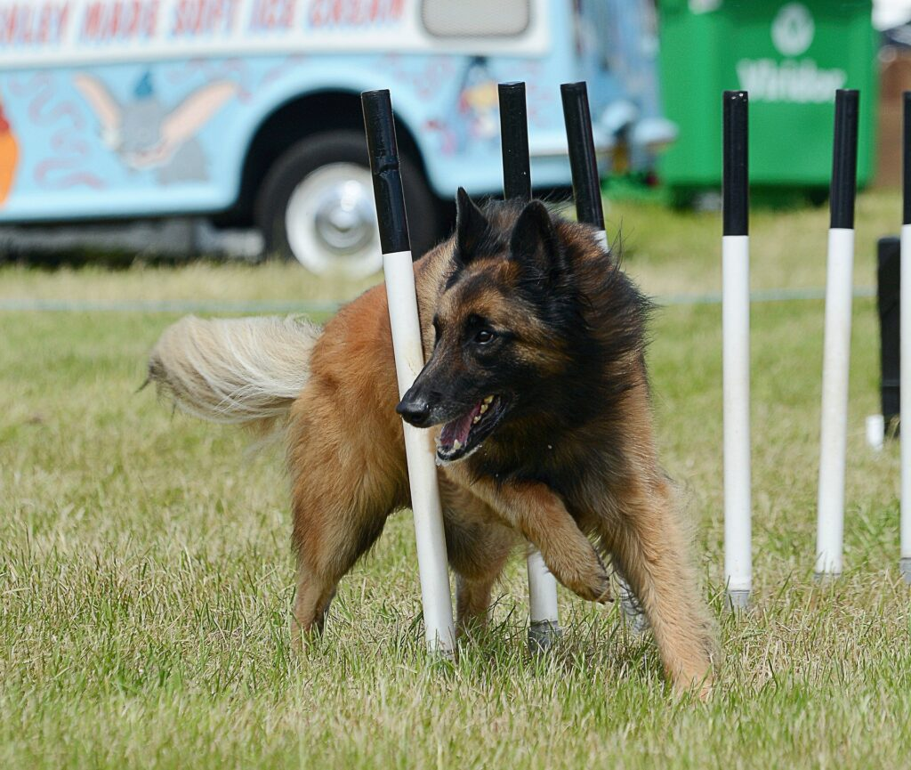 Best Rv Dogs, Temperament