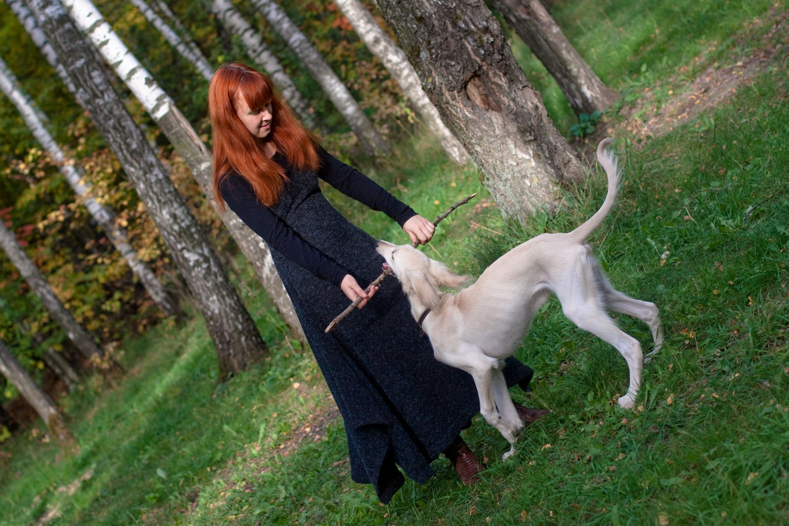Cream Saluki biting stick held by Woman in black dress and long red hair. In forest with lush grass.