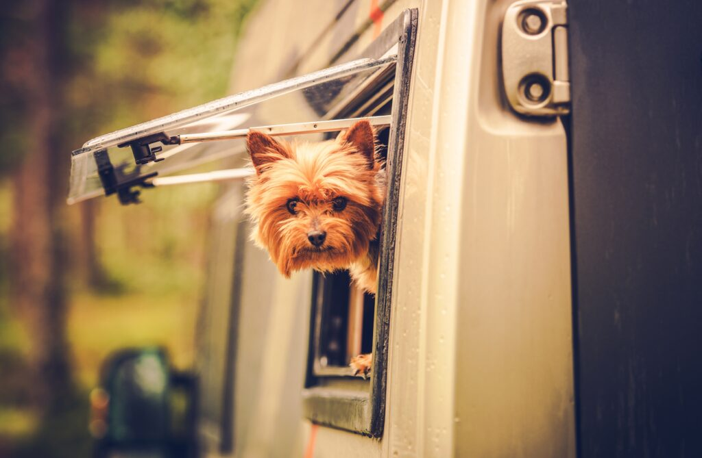 Should You Leave Your Pet In Your RV