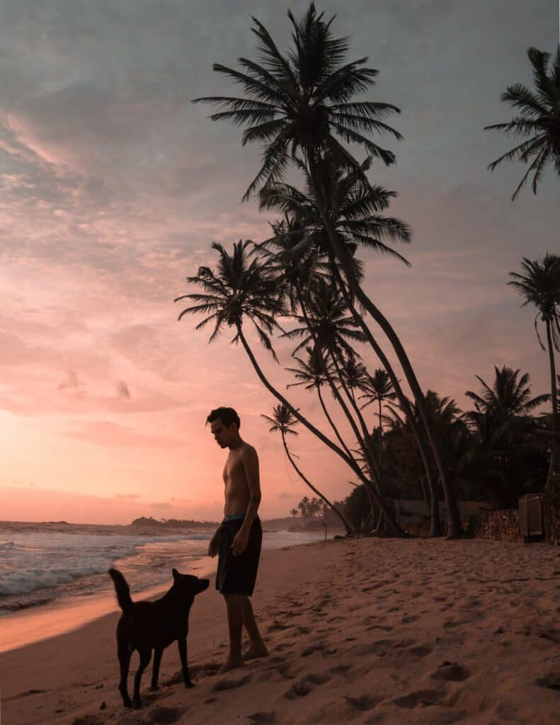 Travelling and Flying With Your Dog