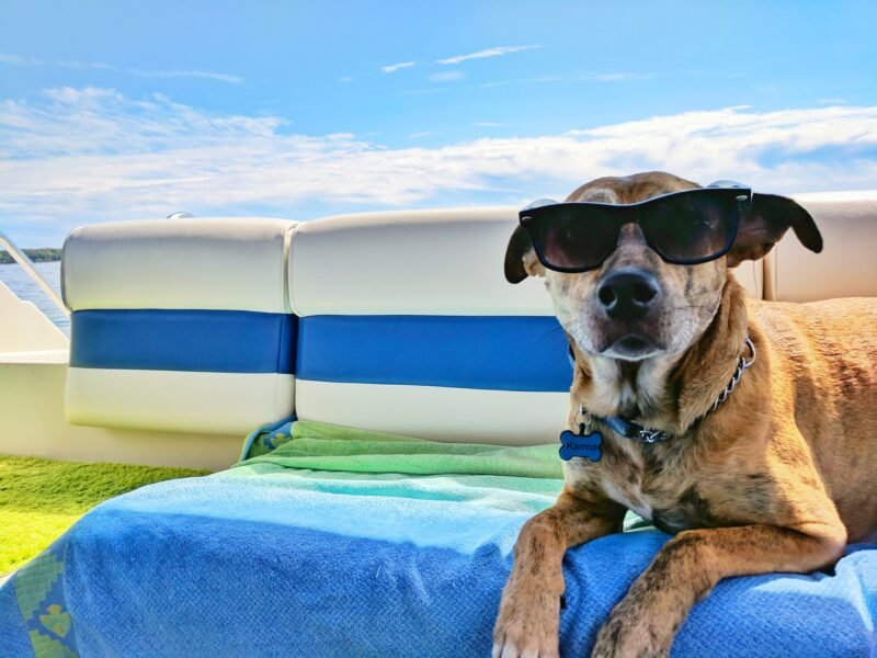 7 Blogs To Inspire You To Travel With Your Dog