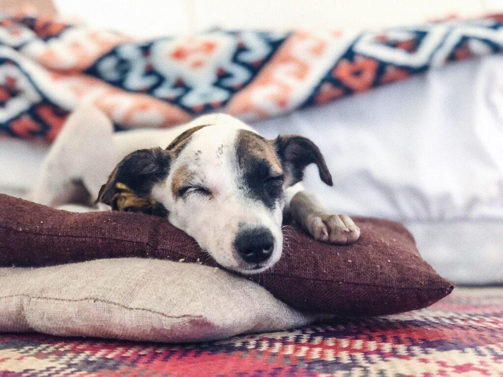 Bringing Familiar Items for Dog on an RV Trip To Keep Them Calm