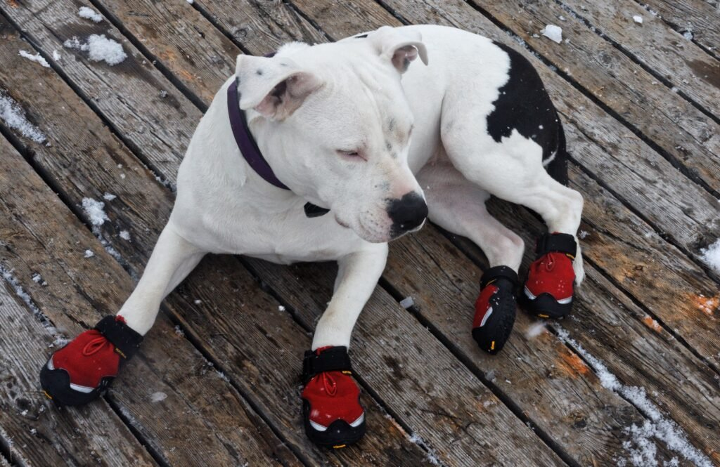 Dog Boots Protecting Paws