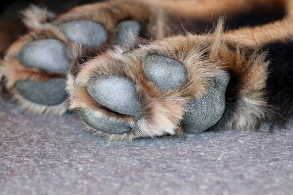 Dogs Paws in Cold Weather