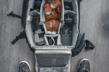 Flying with Your Dog/ Humorous pic of brown dog stuffed into center section of camera case luggage