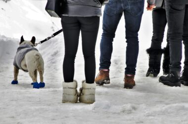 How To Protect Your Dogs Paws In Cold Weather