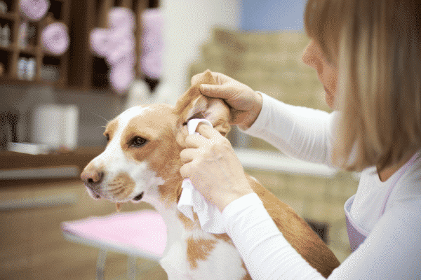 Clean Your Dog's Outer Ears with a Soft Cloth