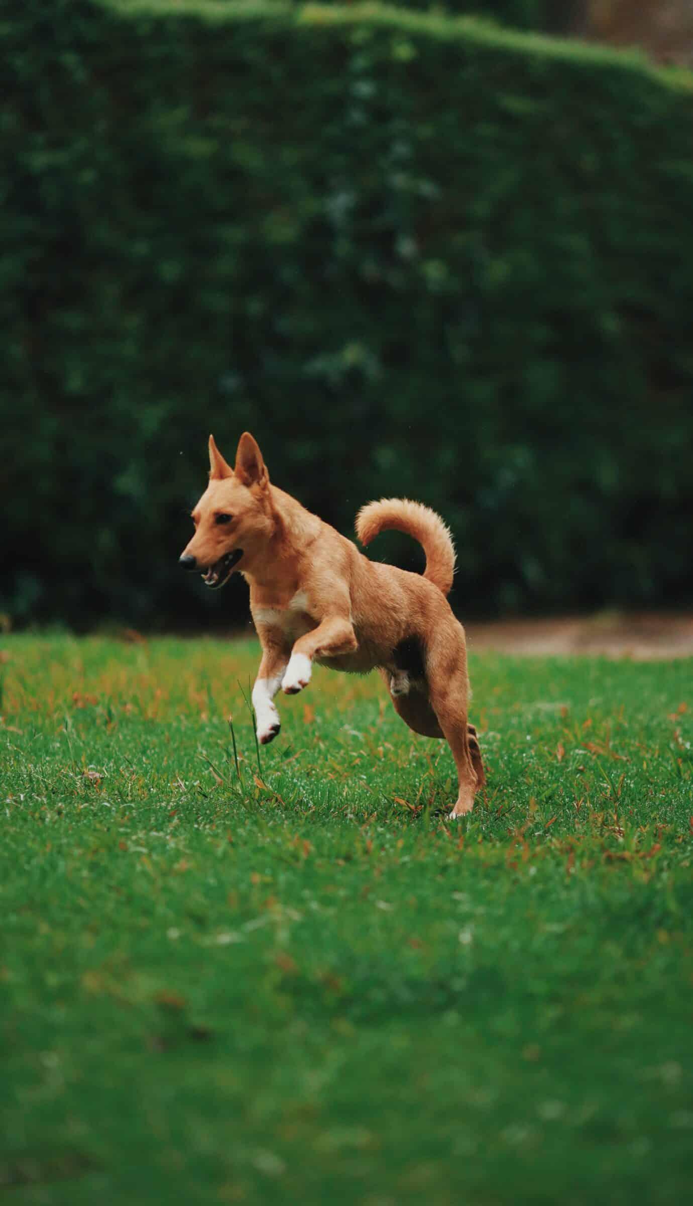 Dog Need Exercise