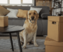 Best Medium-Sized Dogs for Apartments