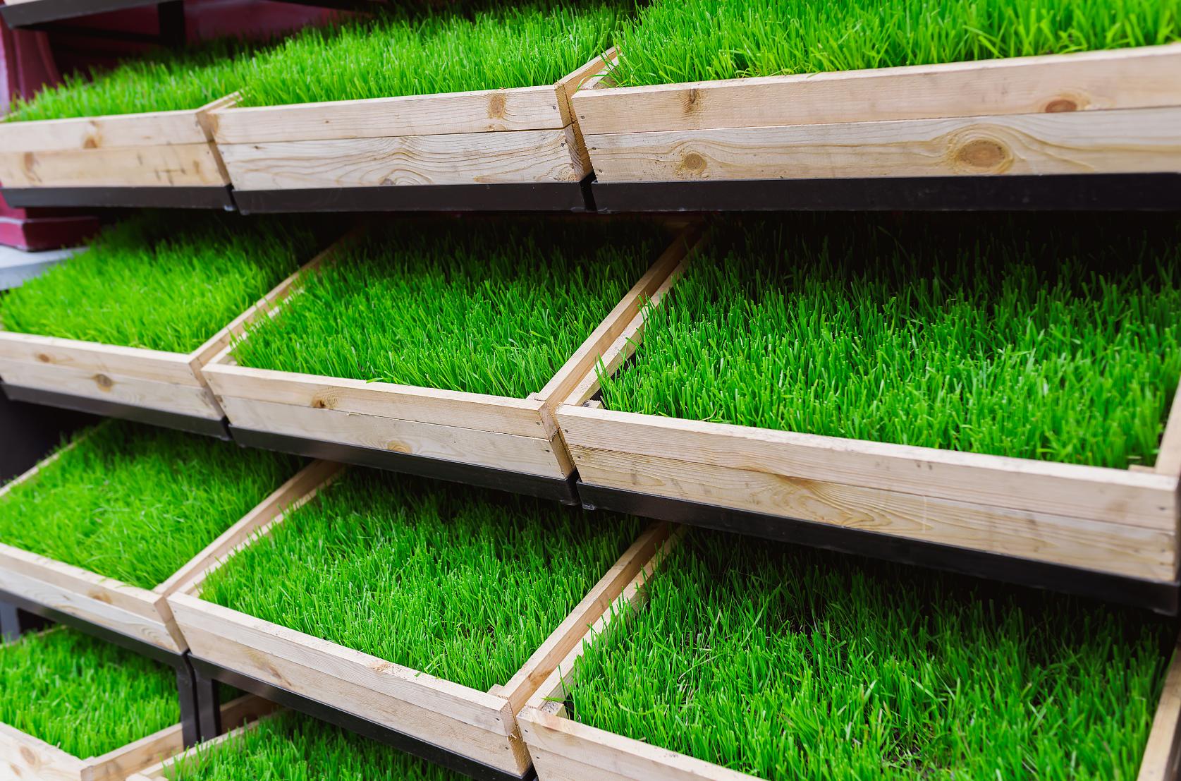 Natural Grass Pads in Wooden Frames