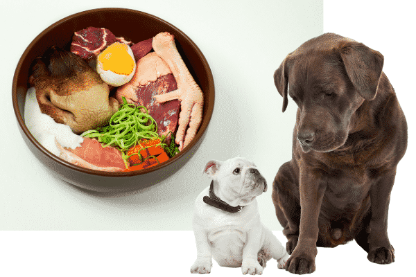 Determine How Much to Feed Your Dog Based on its weight
