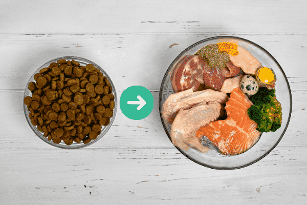 Transition Slowly from Kibble to a Raw Diet for Dogs