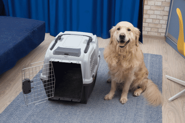 Large Dog sitting next to Airline Approved Pet Carrier with Open Door. Dog Maybe too Big to fit inside.