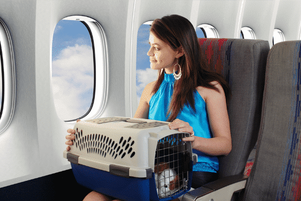 Woman seated in Airplane Holding Pet Carrier Containing Sleeping Dog