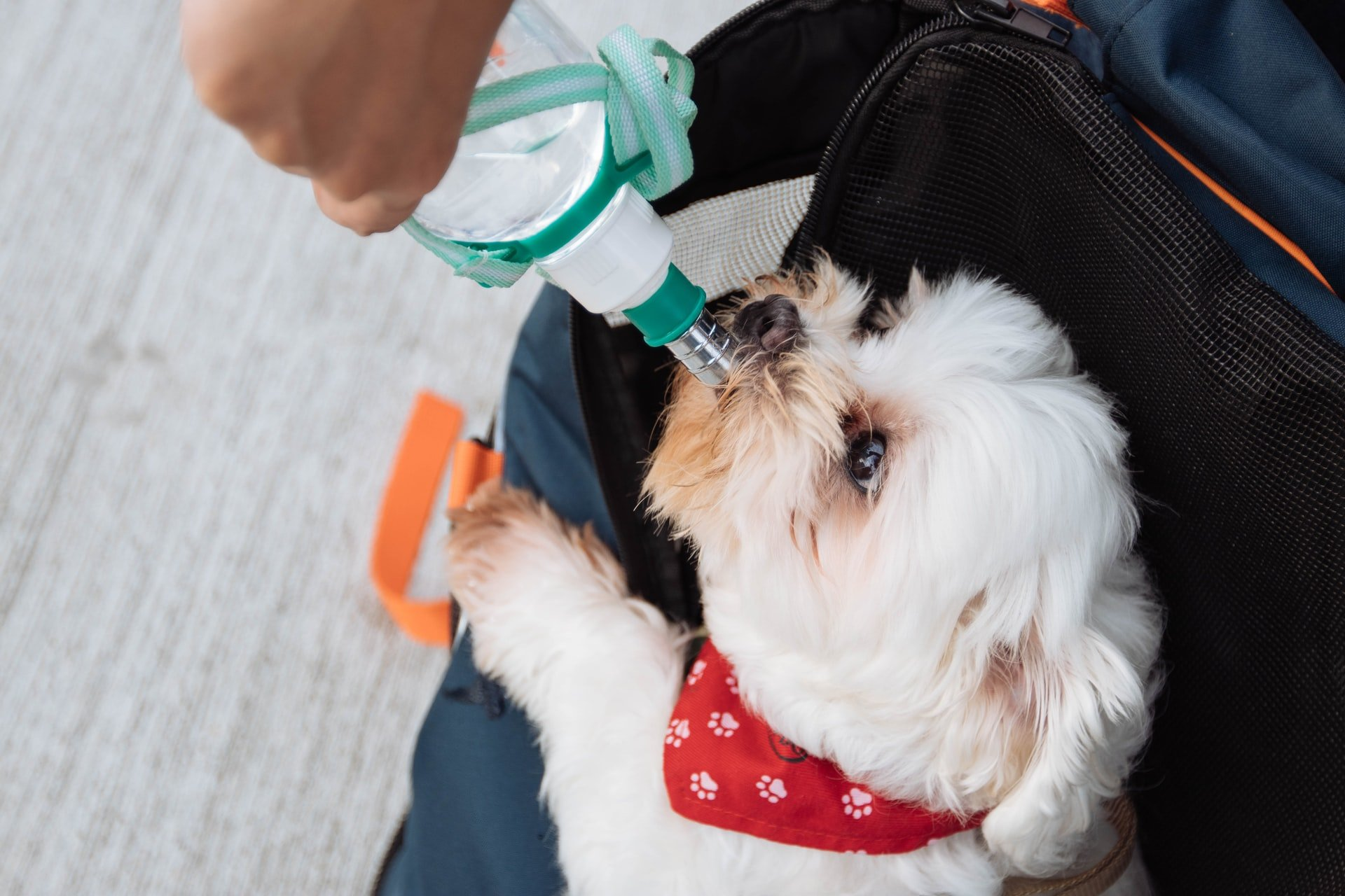 dog drinking from a water bottle, trick your dog into drinking water