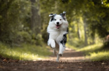 dog running on trail, dehydration in dogs