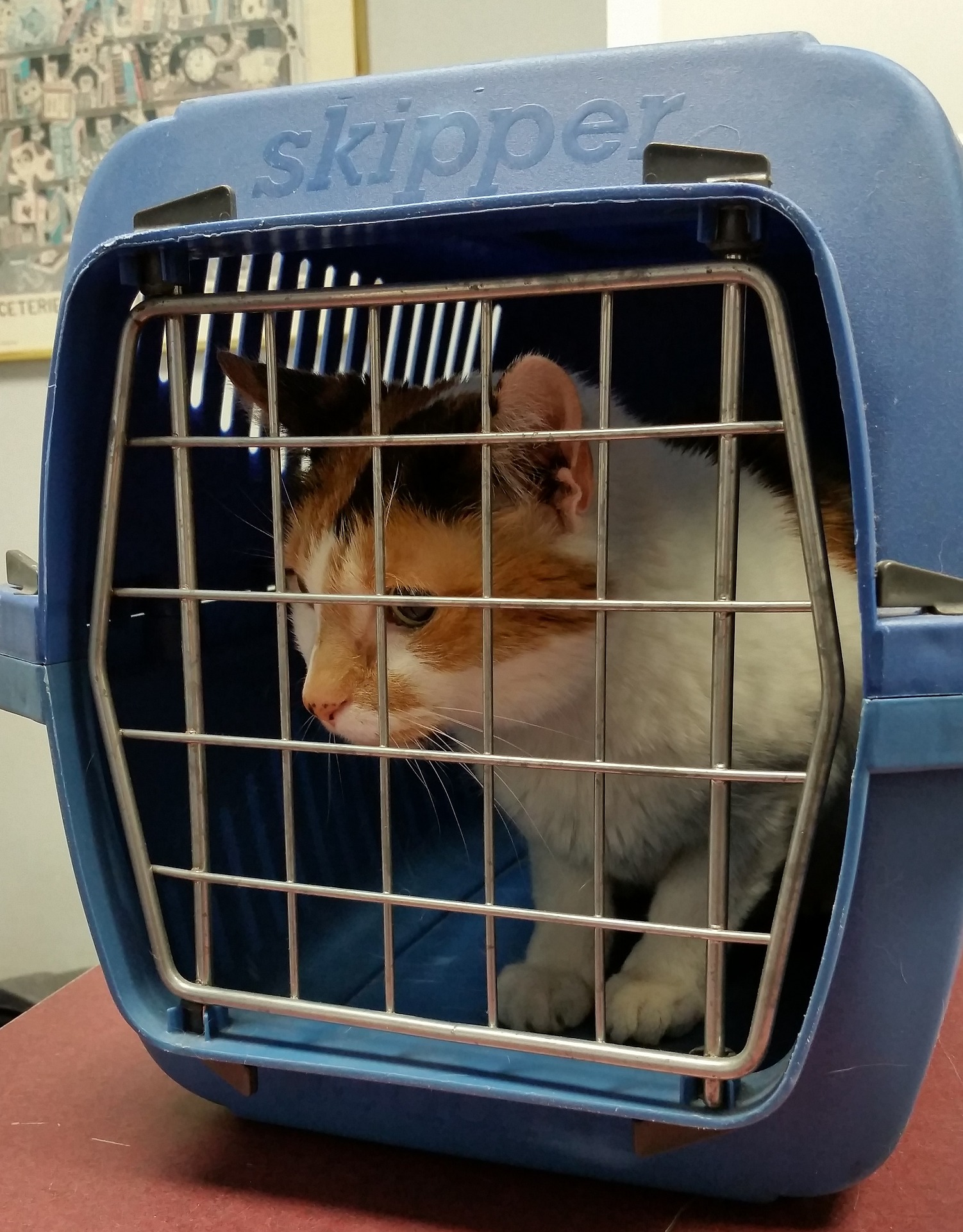 Best Cat Carrier for Traveling