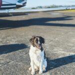 Dog Sitting Near Airplane