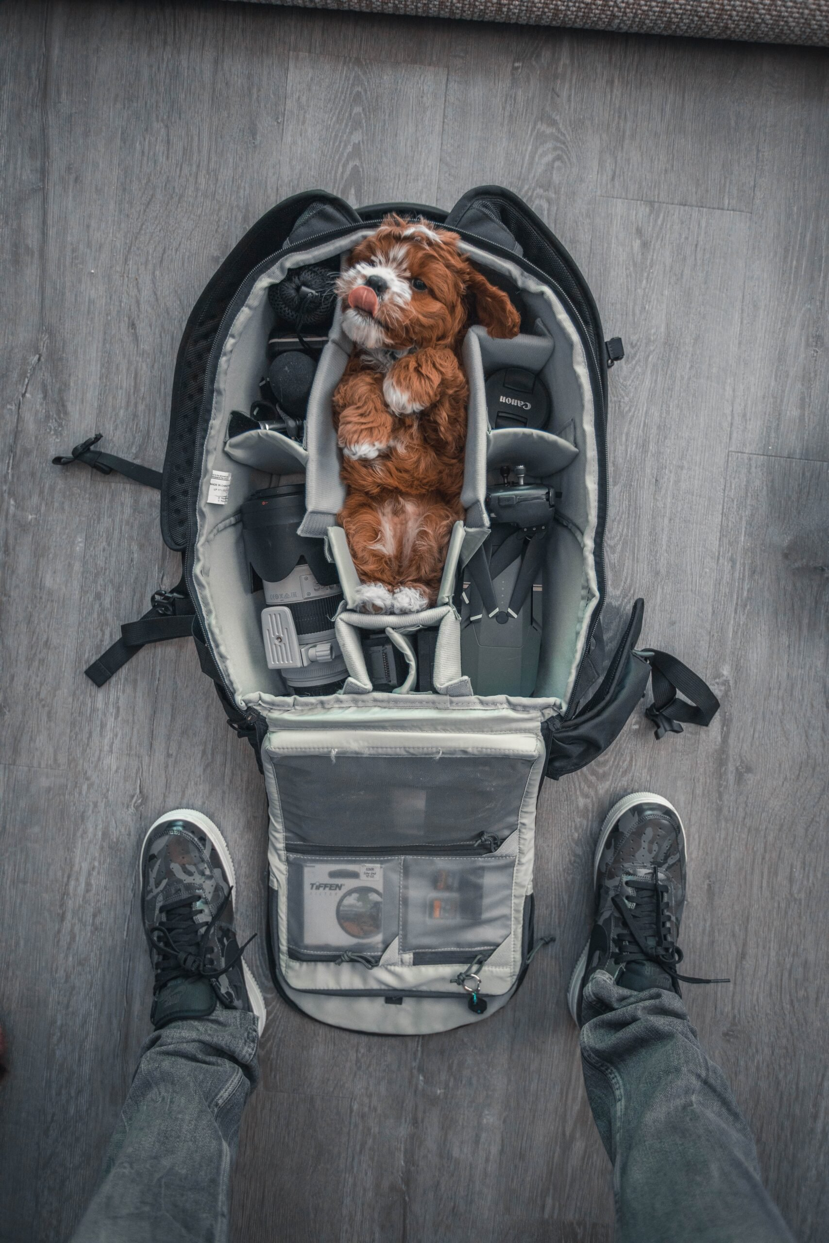 Dog in the Large Carrier for Travel