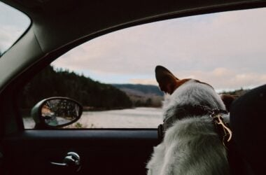 Pet Carrier in an Uber