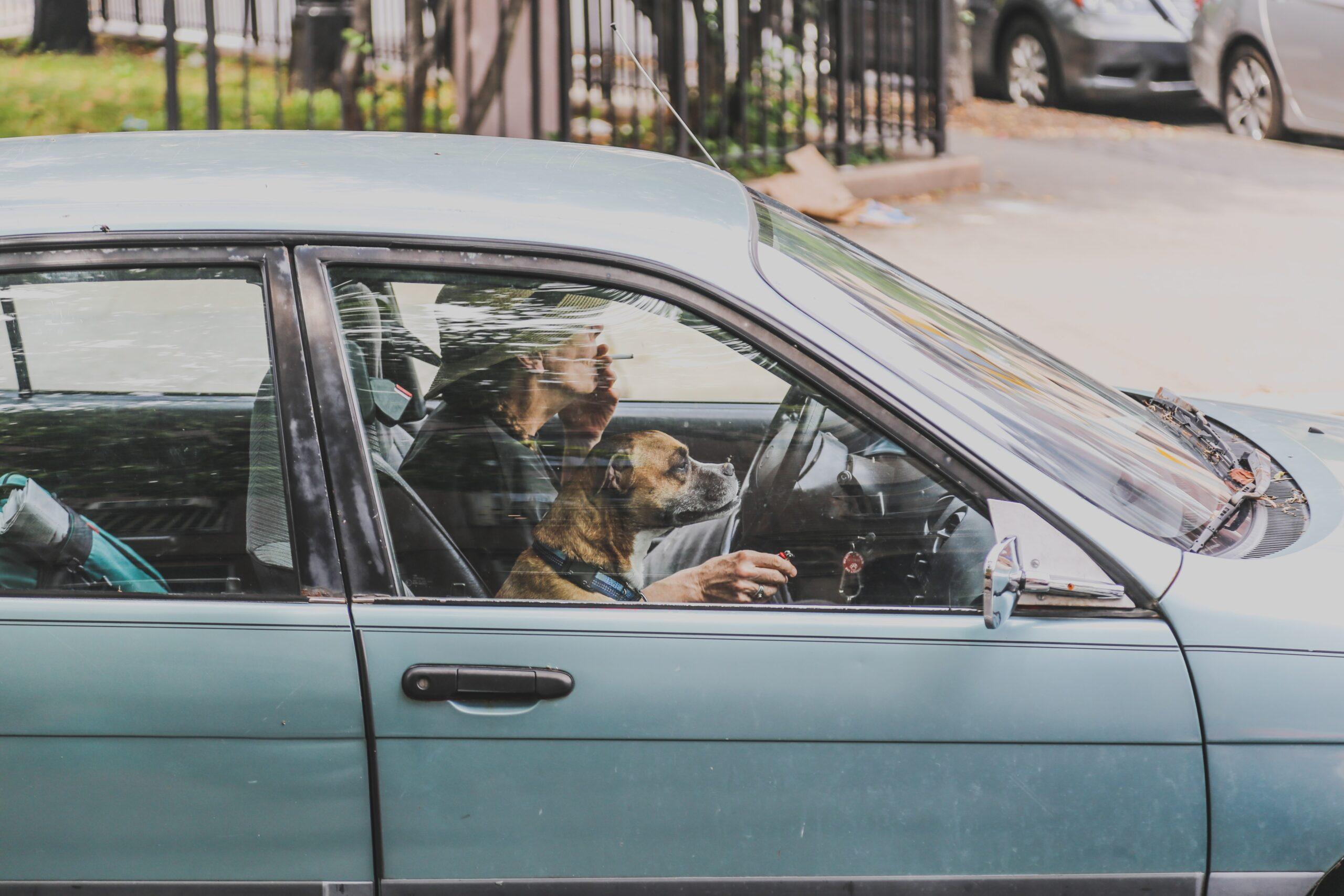 Pet-Friendly Car Driver
