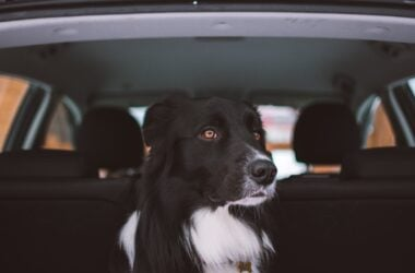 Secure a Pet Carrier in the Car
