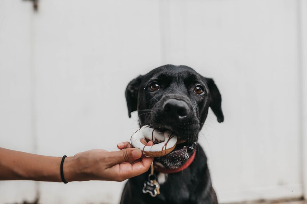 black lab puppy  The best food for your Labrador puppy may be be a grain free, fresh food, raw, kibble, or canned