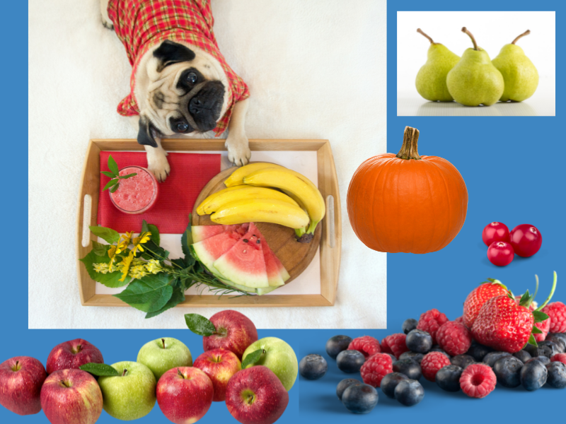 fruits that good for dogs and puppies: watermelon, apples, pears, berries, cranberries, pumpkin, and bananas