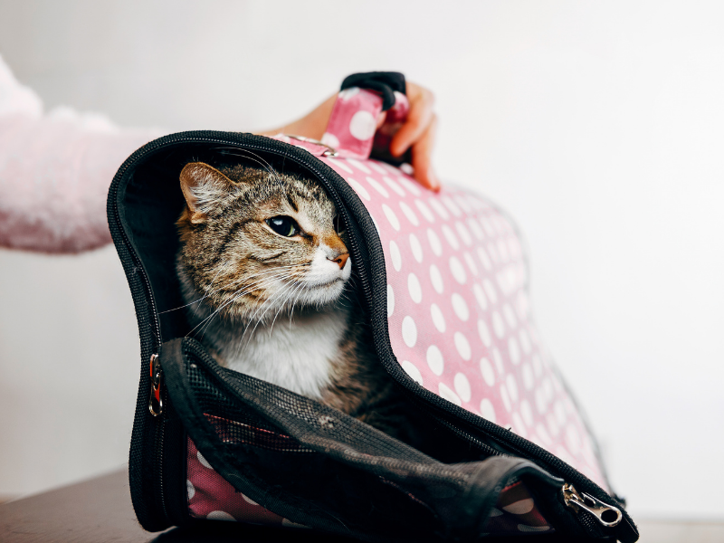 Adorable Pink Cat Carrier.  Pink Pet Carriers aren't just for dogs!