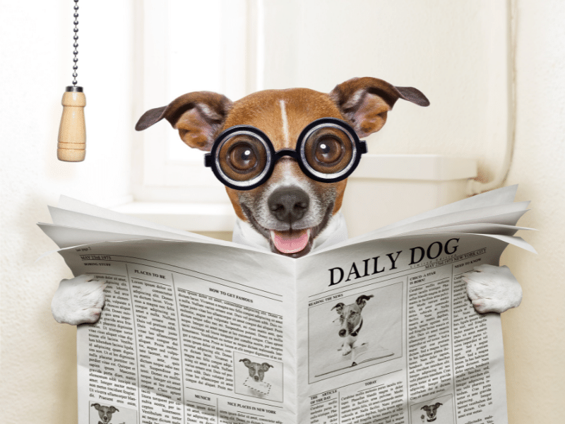 Funny Picture of Dog on toilet with thick glasses reading the Daily Dog Magazine.