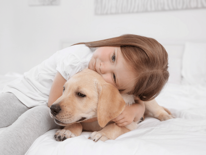 Socialize your Lab. Get it used to children, other dogs, adults, and vet  Picture of young girl hugging labrador puppy